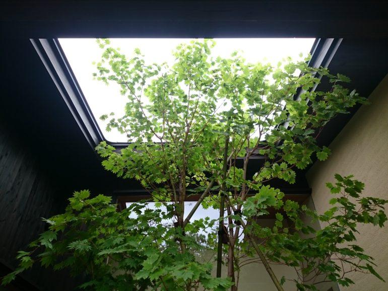 株立ちの雑木でさわやかな風を感じるエントランス